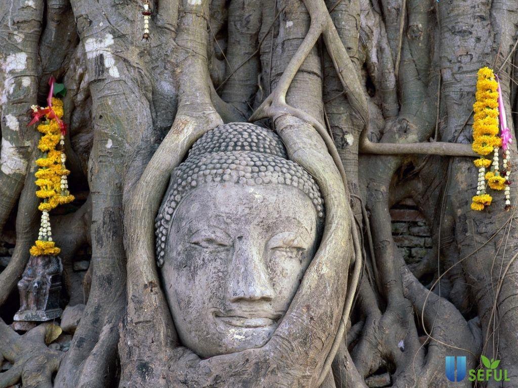 Công viên lịch sử Ayutthaya với hình ảnh độc đáo, kỳ bí