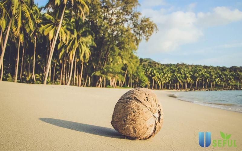 Bờ biển Palm beach với những hàng cọ bao quanh