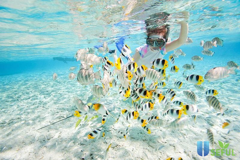 Bạn tha hồ lặn ngắm và chơi đùa với những chú cá khi đi du lịch Koh Rong