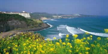 Du lịch đảo Jeju mùa nào đẹp, tháng mấy thời tiết lý tưởng nhất
