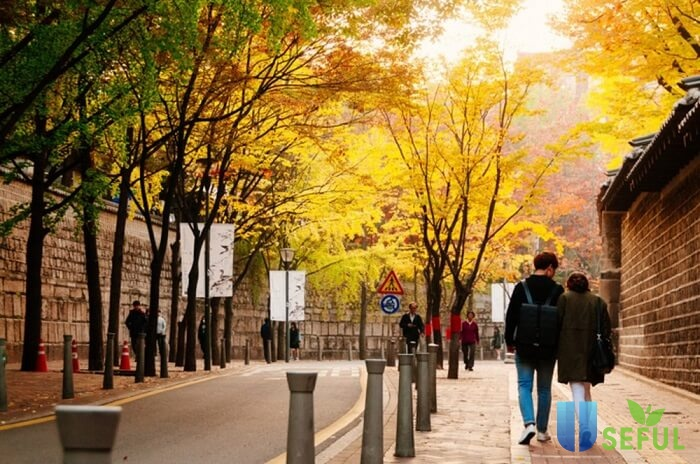 Deoksugung Doldam-gil - Lạc bước trên con đường lãng mạn nhất Seoul