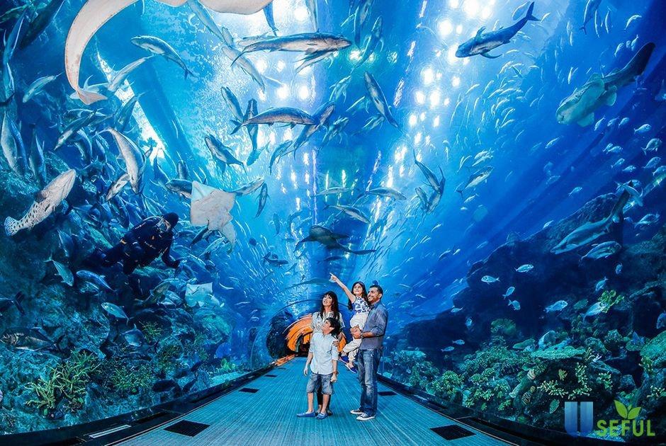 Thủy cung Dubai - Dubai Aquarium & Underwater Zoo   Yeudulich